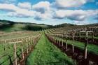 Congress Must Pass a Farm Bill in 2012