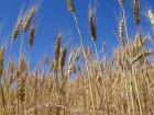 Hightowers-Monsanto-Katherine H