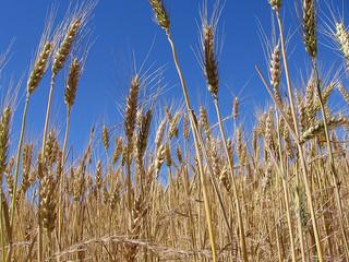 Catching Monsanto's Drift