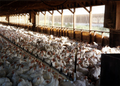 Taking Stock of Factory Farm Pollution