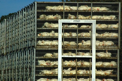It's Time for Maryland's Factory Farms to Pay Their Fair Share