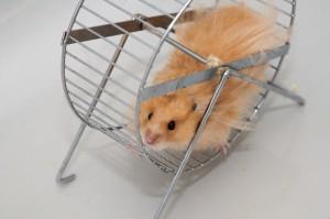 Hamster Wheel Economics