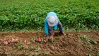 immigrant_migrant_workers_agriculture