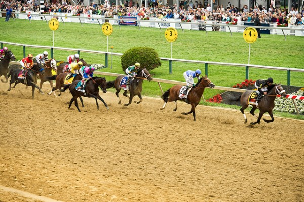 horse-racing-preakness-animal-cruelty