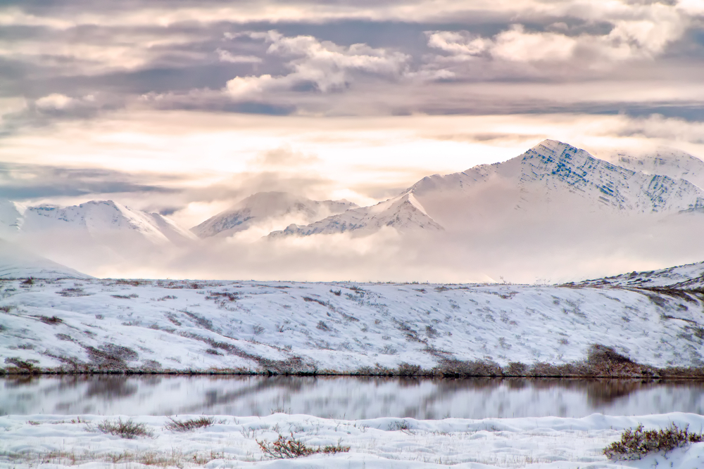 In the Arctic Refuge, a Life Force Hangs in the Balance