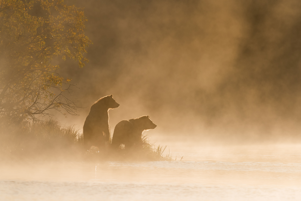 Last Year, I Watched Grizzly Bears Play. This Year, They're Going to Be Trophy Hunted.