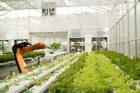 robotic-farmers-automation-jobs-AI-agriculture